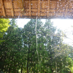Mori-butai Installation